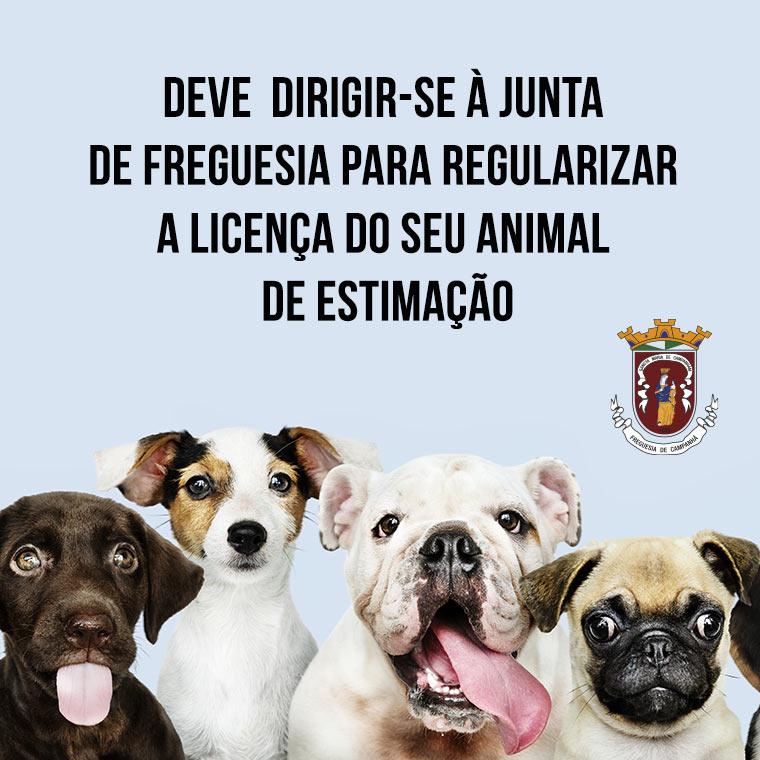 INFORMAÇÃO Licenciamento de Animal de Companhia